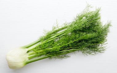 Organic Bunched Fennel