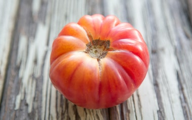 Organic Red Brandywine Heirloom Greenhouse Tomatoes