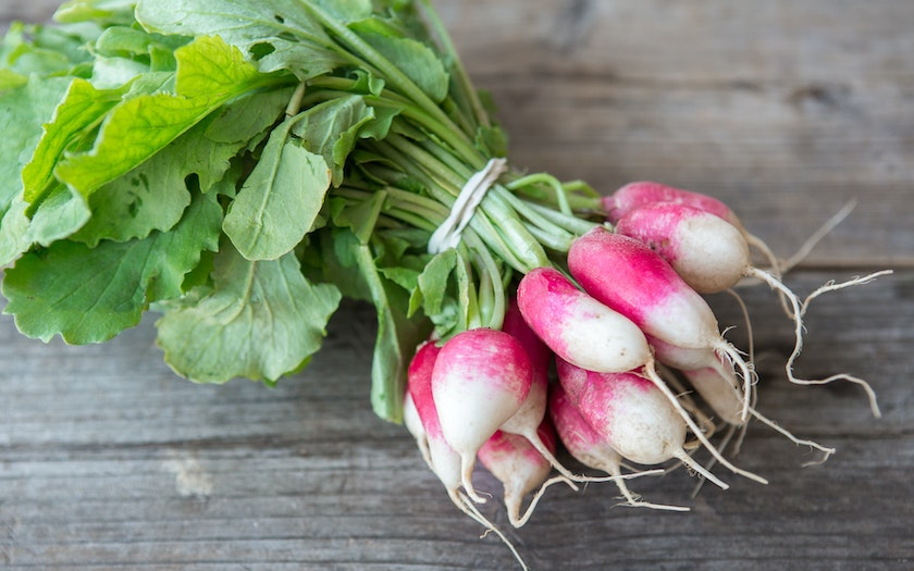 Organic French Breakfast Radishes