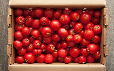 Case of Organic Dry-Farmed Early Girl Canning Tomatoes