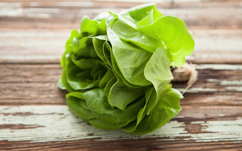 Aquaponic Green Living Butter Lettuce