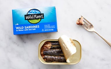 Wild Pacific Sardines in Water