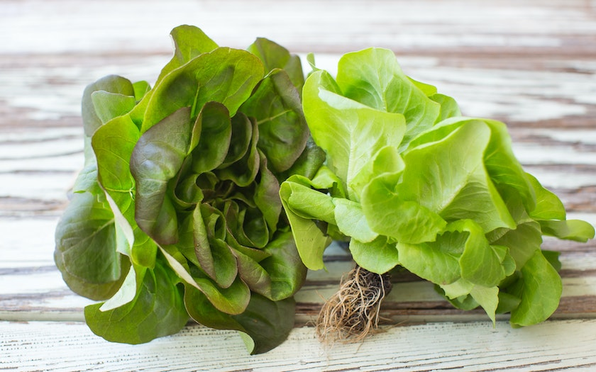 Aquaponic Living Butter Lettuce