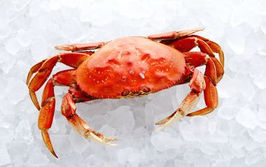 Fresh Cooked California Dungeness Crab