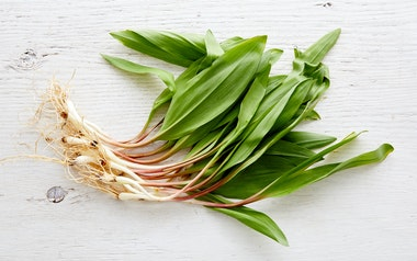 Foraged Ramps