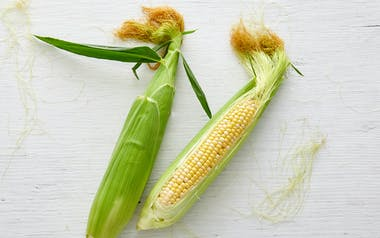 Organic Bi-Color Sweet Corn Duo