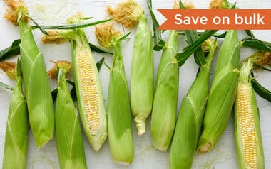 Bulk Organic Bi-Color Sweet Corn
