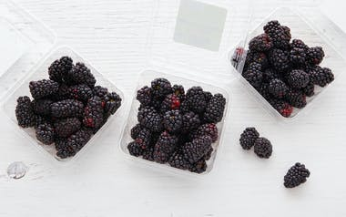 Organic Blackberry 3-Pack